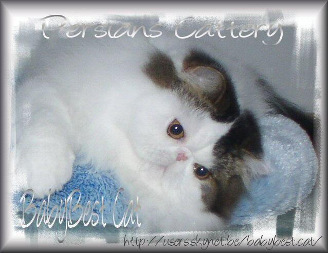 BabyBest Cat